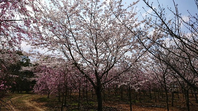 f:id:tosshii-plants:20200404211443j:image
