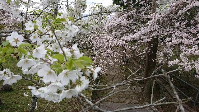 f:id:tosshii-plants:20200405181935j:image