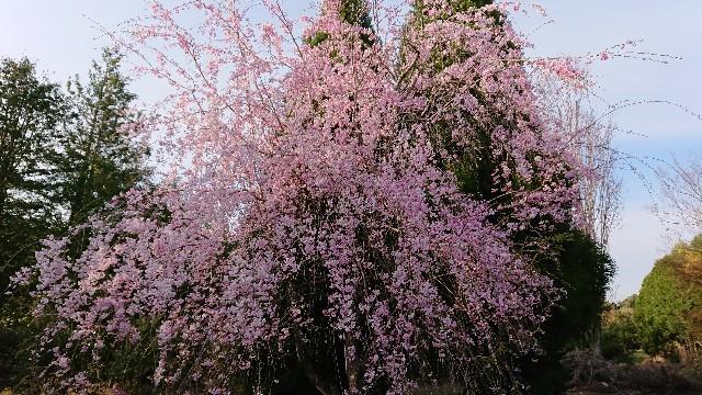 f:id:tosshii-plants:20200411212605j:image