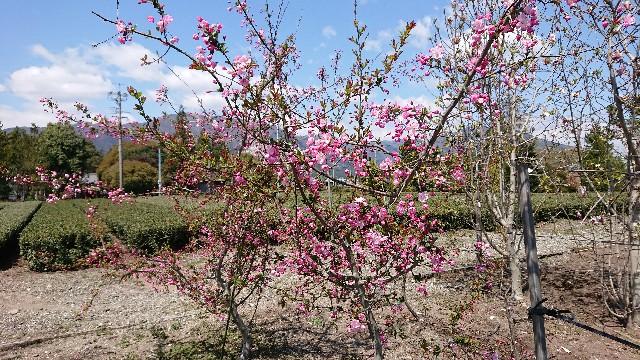 f:id:tosshii-plants:20200412144321j:image