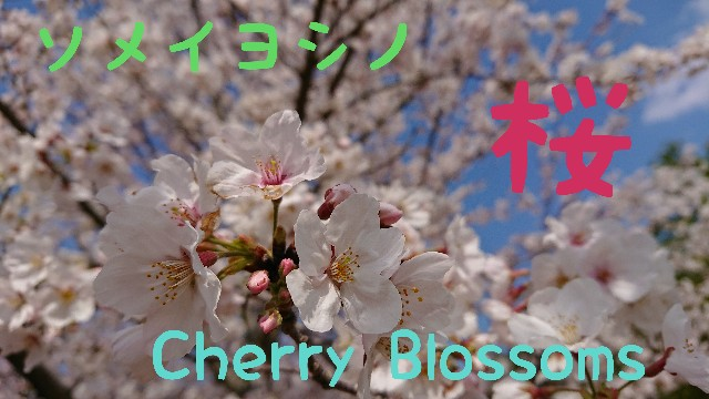 f:id:tosshii-plants:20200419222417j:image