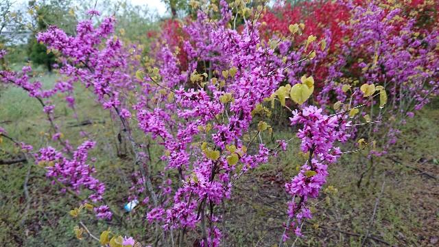 f:id:tosshii-plants:20200420221601j:image
