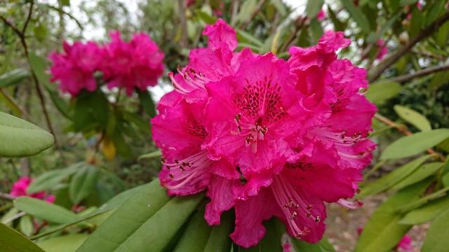 f:id:tosshii-plants:20200425215428j:image