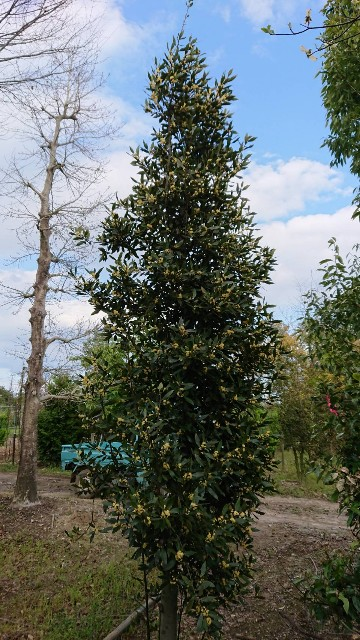 f:id:tosshii-plants:20200430223126j:image