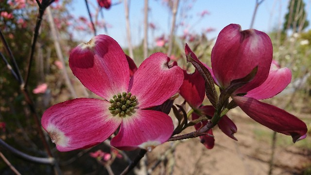 f:id:tosshii-plants:20200501190345j:image
