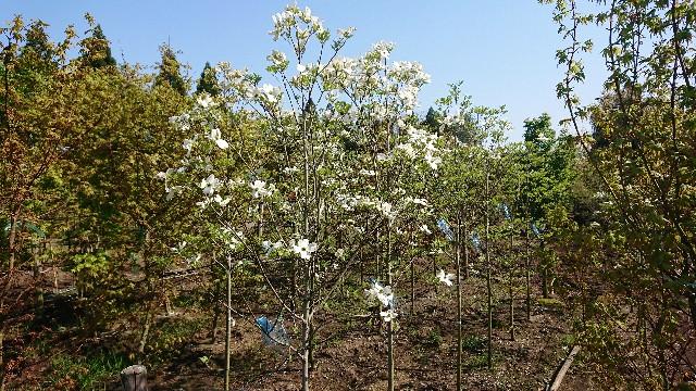 f:id:tosshii-plants:20200501193421j:image