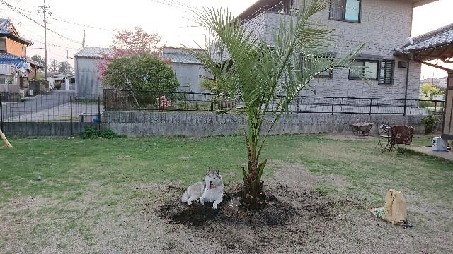 f:id:tosshii-plants:20200503210753j:image