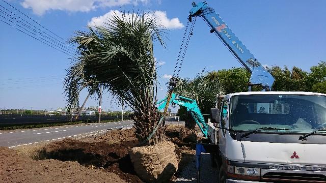 f:id:tosshii-plants:20200507223709j:image