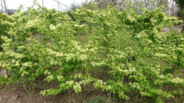 f:id:tosshii-plants:20200508183736j:image