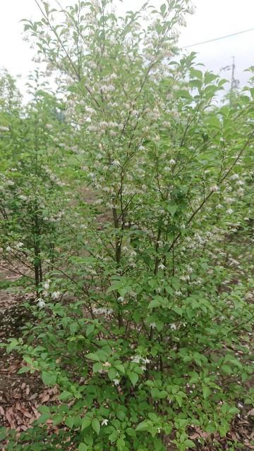 f:id:tosshii-plants:20200522213935j:image