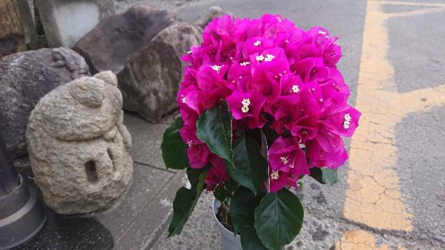 f:id:tosshii-plants:20200523192530j:image