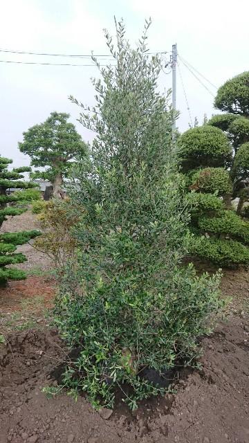 f:id:tosshii-plants:20200604203828j:image