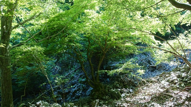 f:id:tosshii-plants:20200607221743j:image