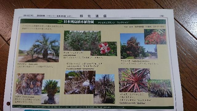 f:id:tosshii-plants:20200629202135j:image