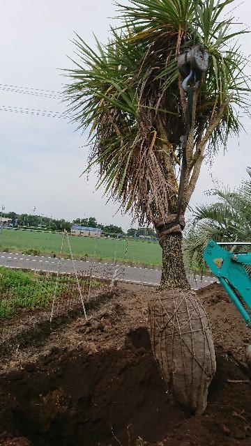 f:id:tosshii-plants:20200629211710j:image