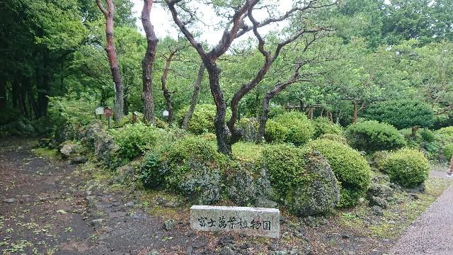 f:id:tosshii-plants:20200713225132j:image