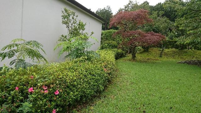 f:id:tosshii-plants:20200713225252j:image
