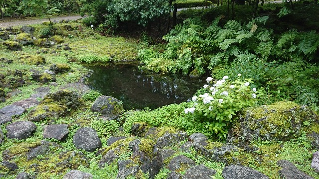 f:id:tosshii-plants:20200713225420j:image