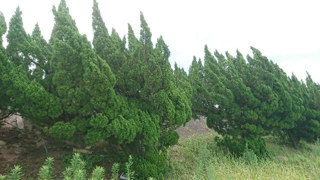 f:id:tosshii-plants:20200723231452j:image