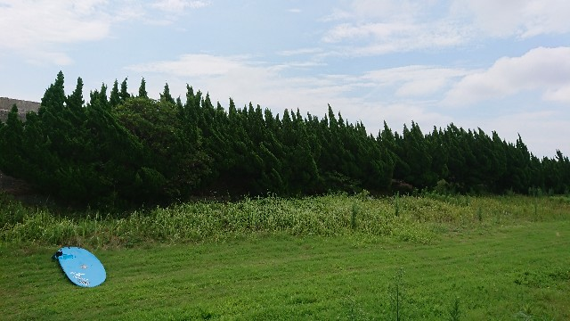 f:id:tosshii-plants:20200723231549j:image