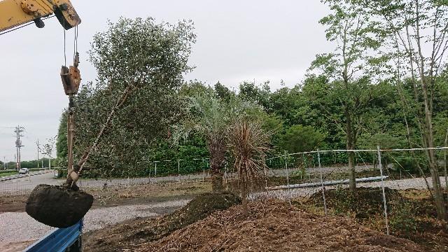 f:id:tosshii-plants:20200724192609j:image