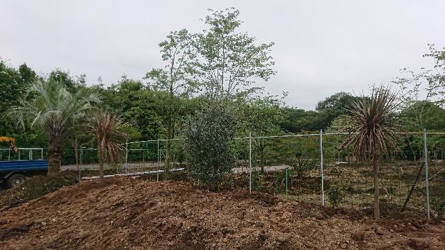 f:id:tosshii-plants:20200724192652j:image