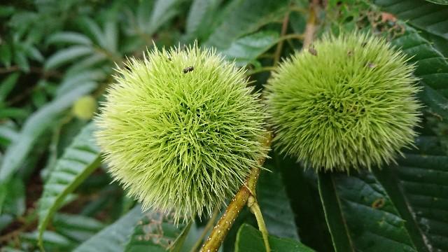 f:id:tosshii-plants:20200729204617j:image