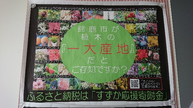 f:id:tosshii-plants:20200819202414j:image