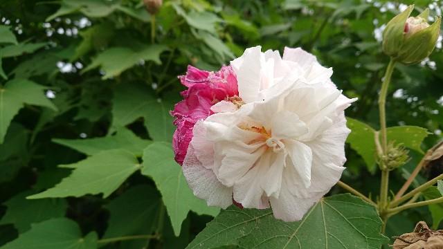 f:id:tosshii-plants:20200914223626j:image