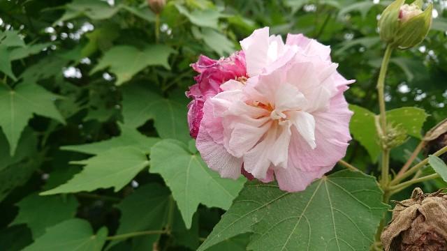 f:id:tosshii-plants:20200914223735j:image