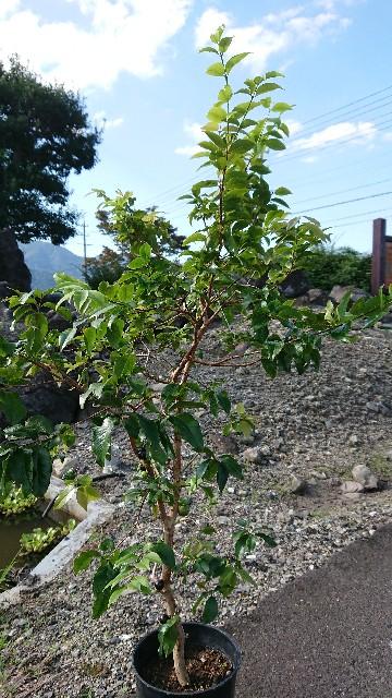 f:id:tosshii-plants:20200922212416j:image