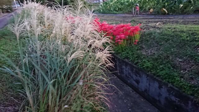 f:id:tosshii-plants:20201002204917j:image