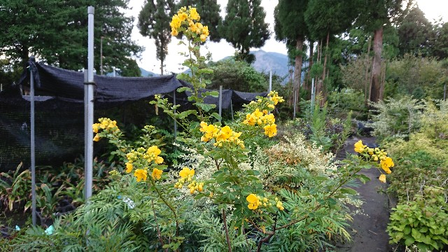 f:id:tosshii-plants:20201003223728j:image