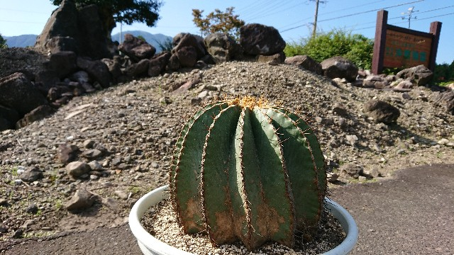 f:id:tosshii-plants:20201005201740j:image