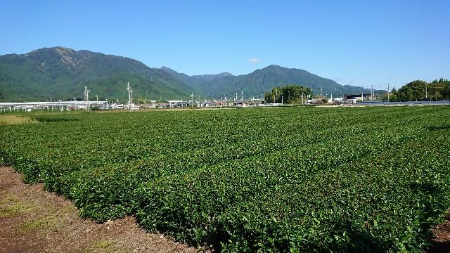 f:id:tosshii-plants:20201012214822j:image