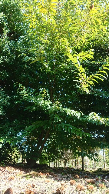 f:id:tosshii-plants:20201014224510j:image