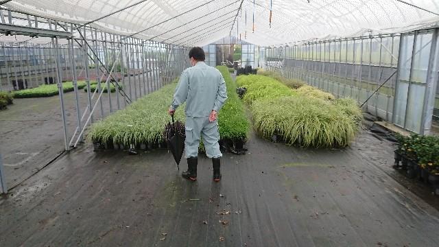 f:id:tosshii-plants:20201023220810j:image