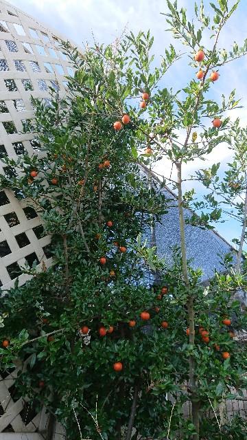 f:id:tosshii-plants:20201030222439j:image