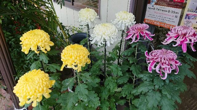 f:id:tosshii-plants:20201102224850j:image