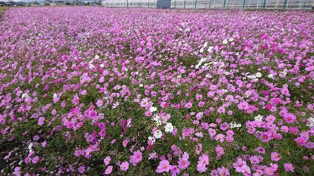 f:id:tosshii-plants:20201104221428j:image