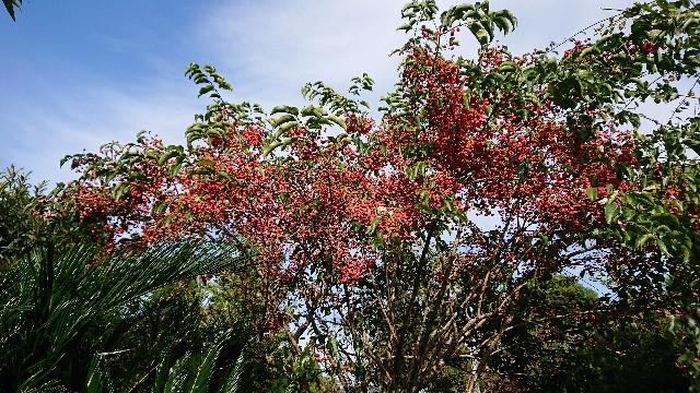 f:id:tosshii-plants:20201106231757j:image