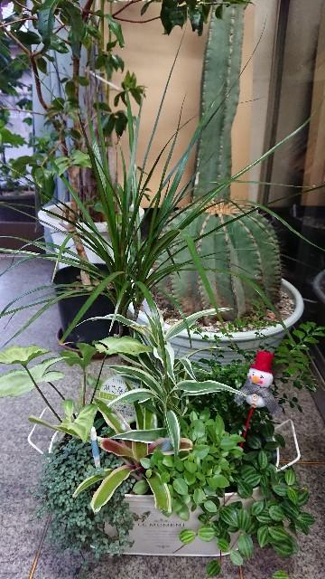 f:id:tosshii-plants:20201120225401j:image