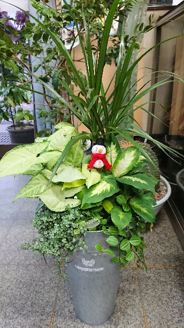 f:id:tosshii-plants:20201120225420j:image