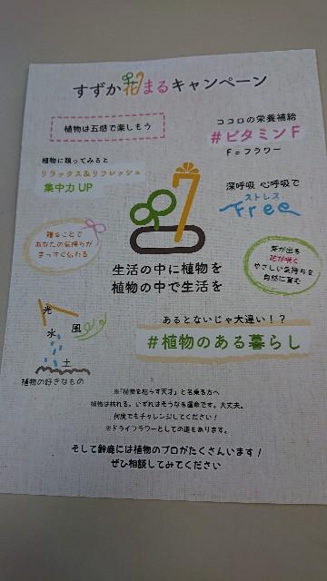 f:id:tosshii-plants:20201120225502j:image