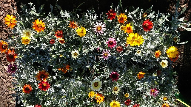f:id:tosshii-plants:20201124222805j:image