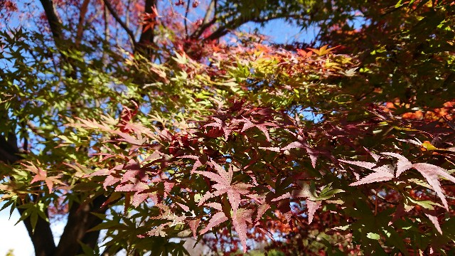 f:id:tosshii-plants:20201127204049j:image