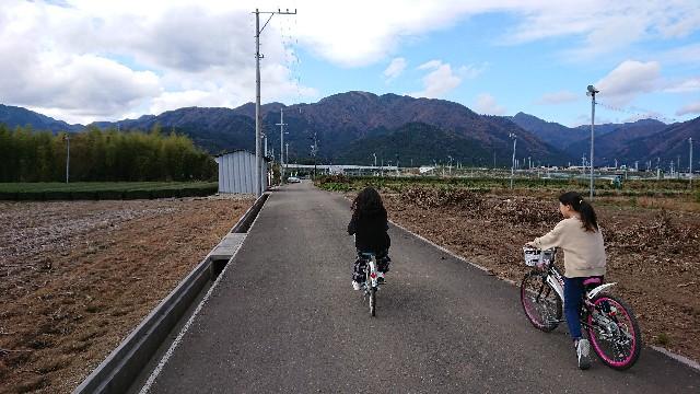 f:id:tosshii-plants:20201129210651j:image