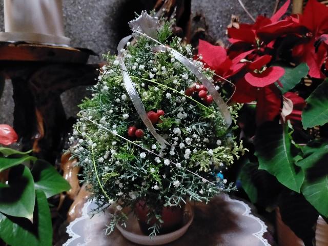 f:id:tosshii-plants:20201219182217j:image