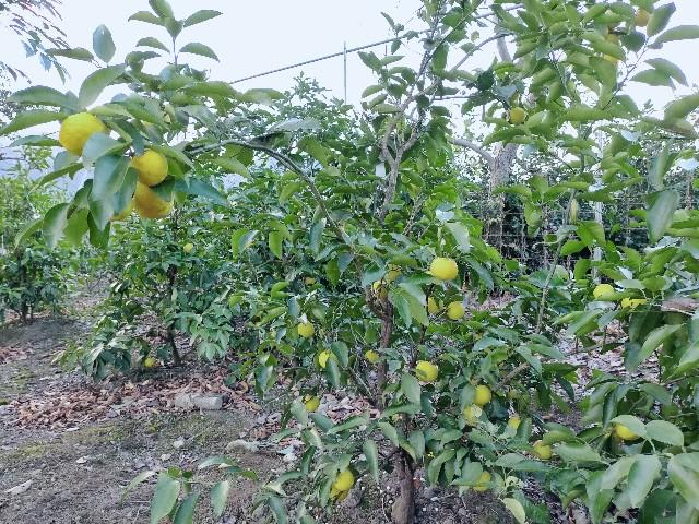 f:id:tosshii-plants:20201221225610j:image