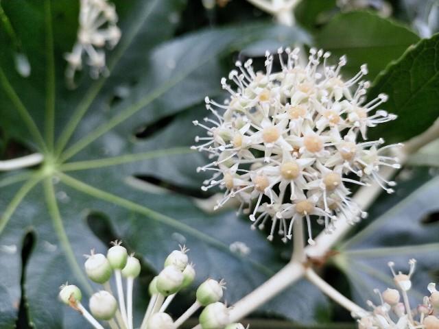 f:id:tosshii-plants:20201224181420j:image